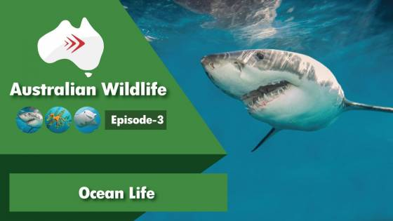 Australian Wildlife Episode 3 Ocean Life