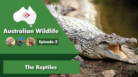 Australian Wildlife Ep 2: Reptiles