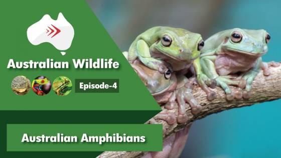 Australian Wildlife Episode 4 Australian Amphibians
